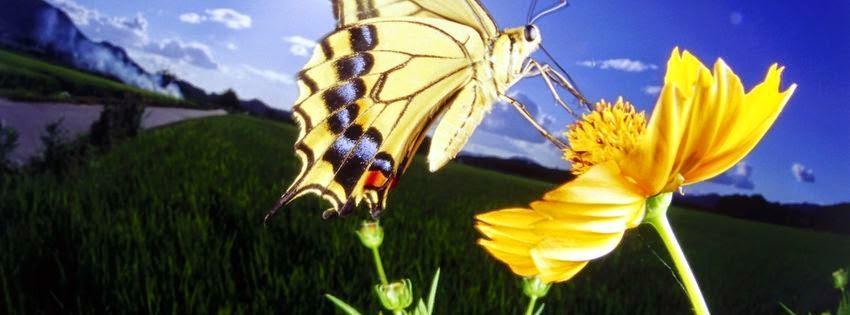 Magnifique couverture facebook HD papillon