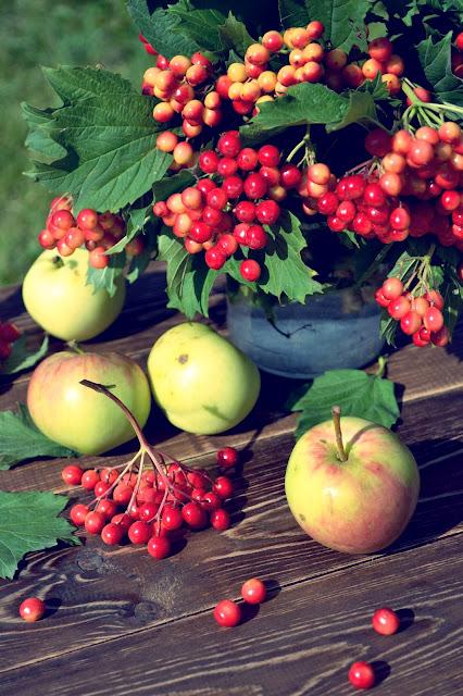 Калина и яблоки.