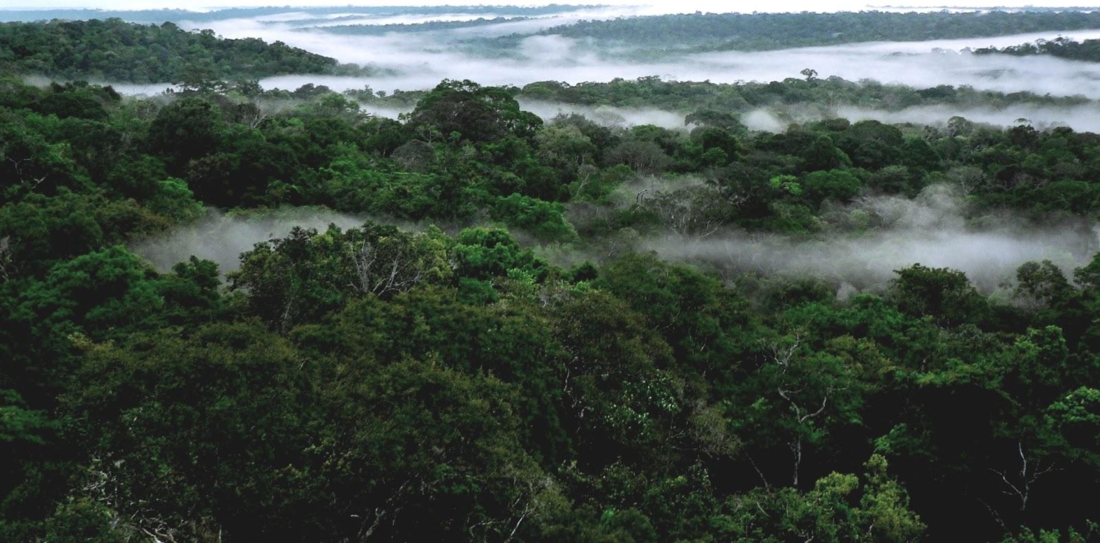 A floresta evapora e esse vapor se  transforma em nuvens