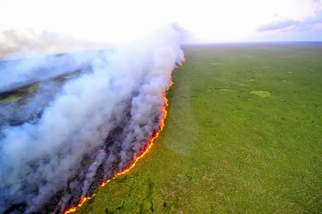Лесные пожары уничтожили огромную часть заповедника в Бразилии