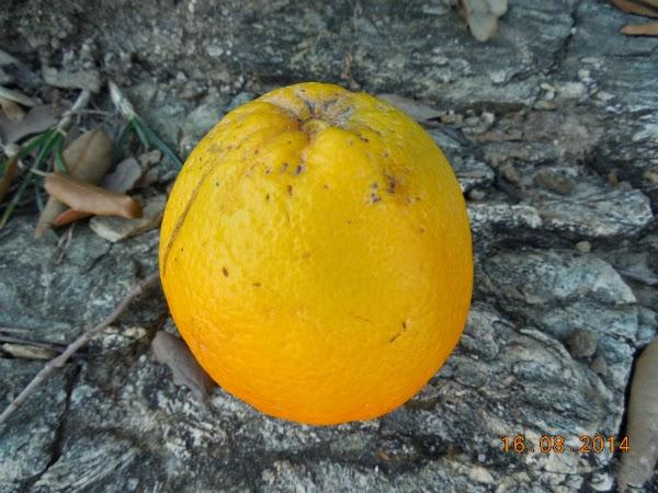 Cate feluri de portocale ati mancat?