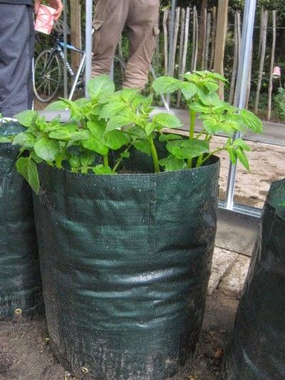 balkontuin moestuin stadstuinieren daktuin aardappel in zak