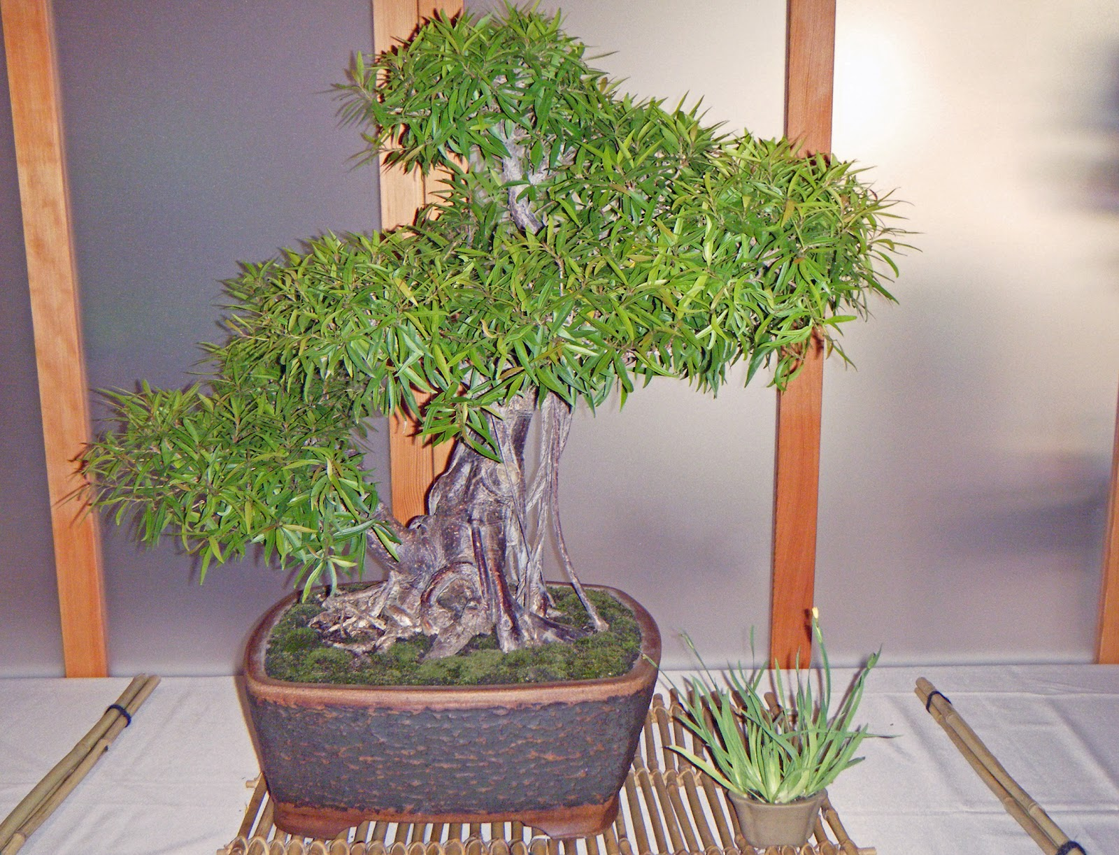 Bonsai In Hoosierland Mid America Show 2012 Part 3 Some Other