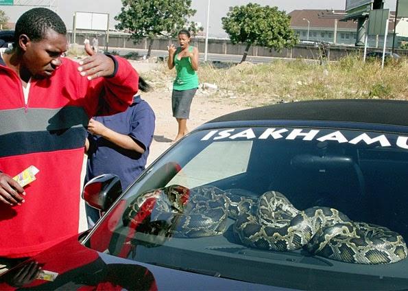Curandeiro sul-africano arruma  bela utilidade  para sogras