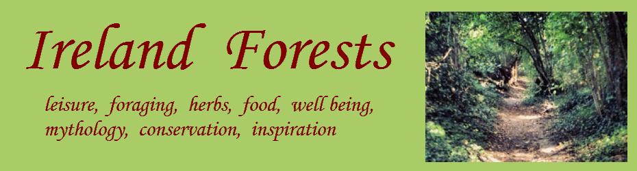 Ireland Forests