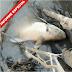 La vinaza es un residuo, altamente corrosivo y contaminante de las fuentes de agua (Video)