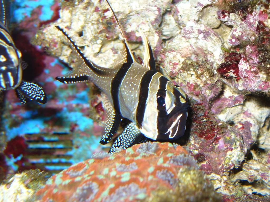 top 5 starter marine fish top 5 starter marine fish