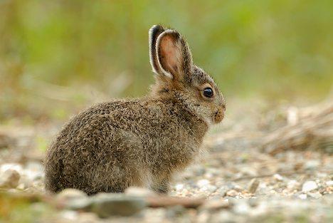 Hare | Animal Wildlife: animal-wildlife.blogspot.com/2011/10/hare.html