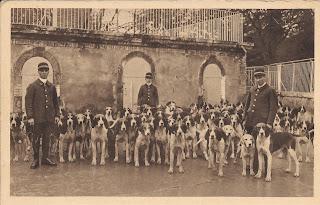 La meute des chiens - Cheverny