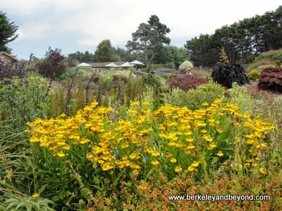 Mendocino Coast Botanical Gardens in Fort Bragg, California