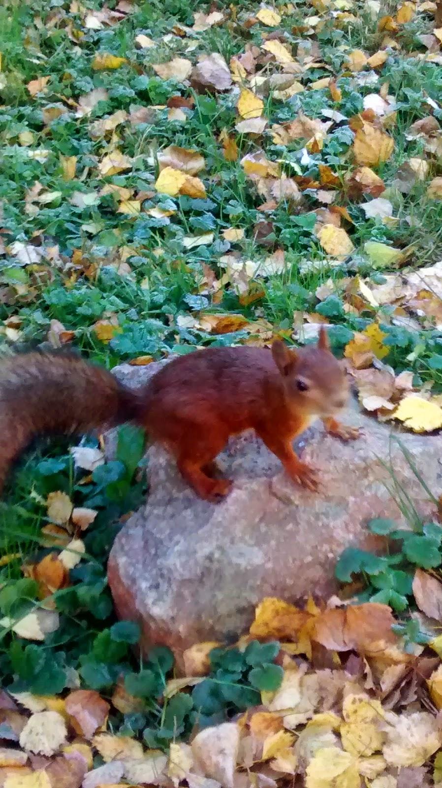 Um museu a céu aberto na Finlândia - esquilinhos