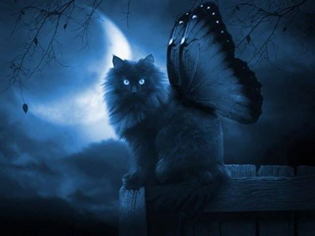 """Fantasy - Immagine dell'amica del """"Rifugio degli Elfi"""" - clic immagine"""