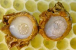 royal jelly&queen's offspring