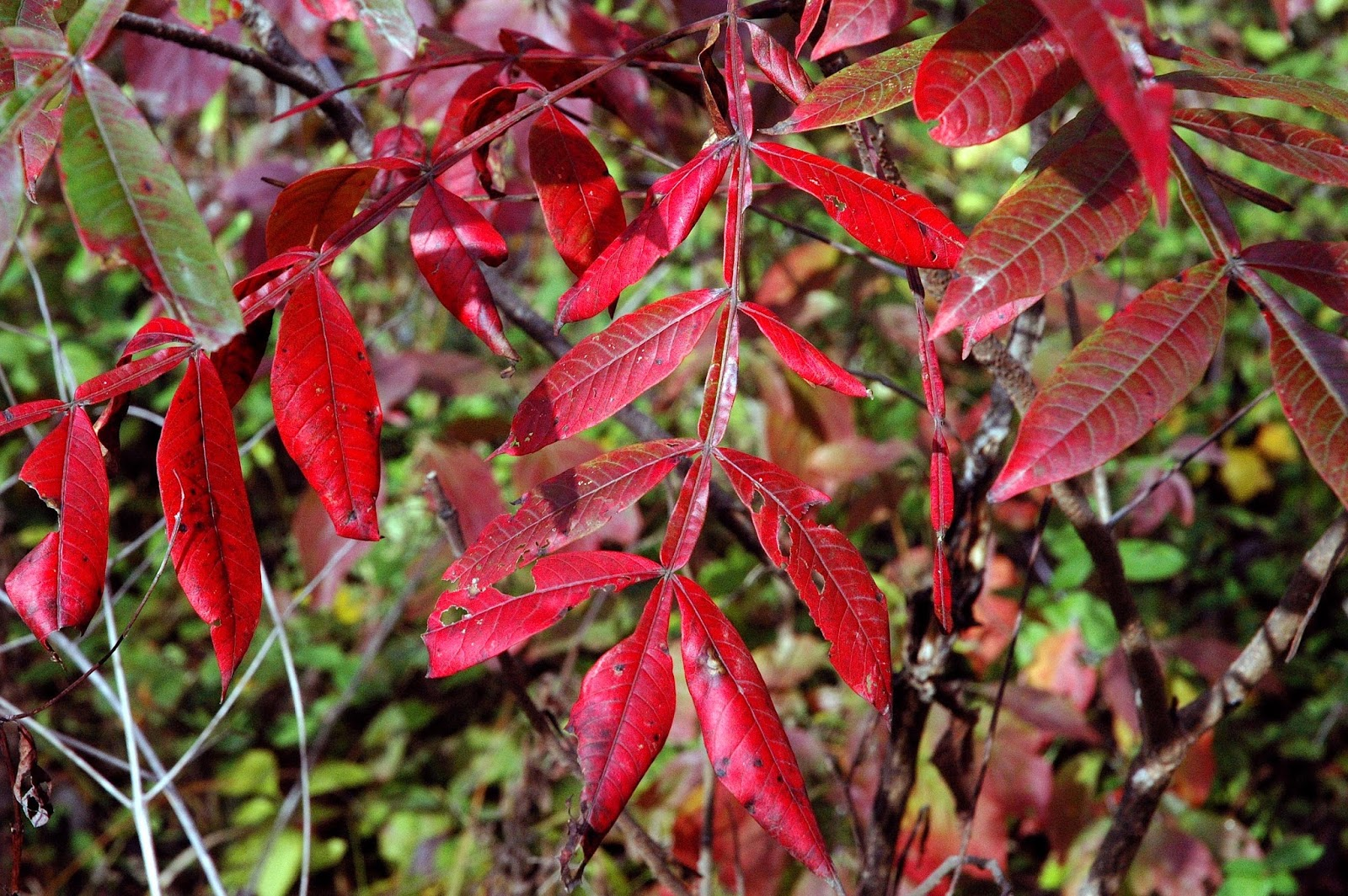 Field Biology in Southeastern Ohio: Autumn: Cool Temperatures and ...