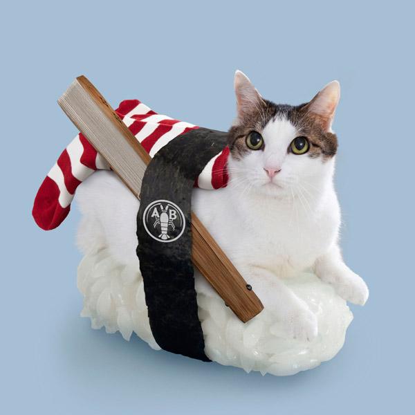 прикольно одетая кошка