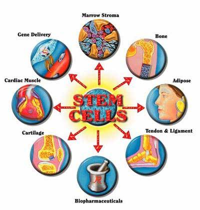 Công nghệ tế bào gốc - Phan Kim Ngọc