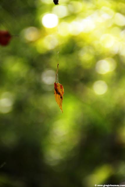 Feuille d'automne, Grands Avaux, Essonne, (C) 2014 Greg Clouzeau