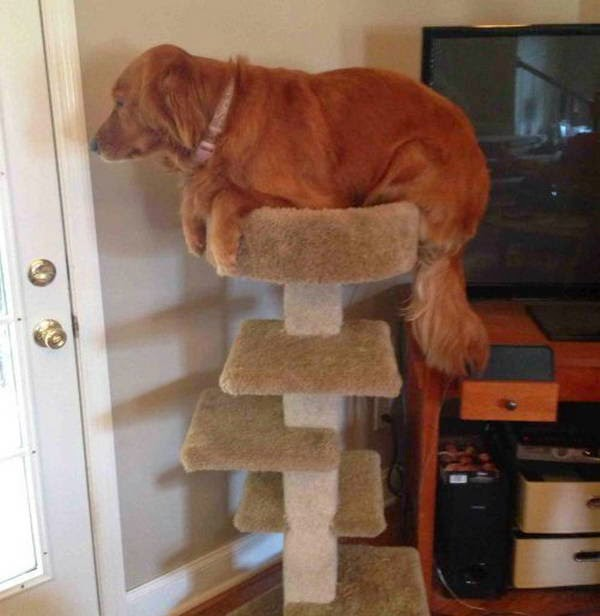 Cute dogs - part 16 (50 pics), funny dog pictures, dog photos, funny dogs, puppy pictures