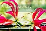Projekt: Friday Flowerday