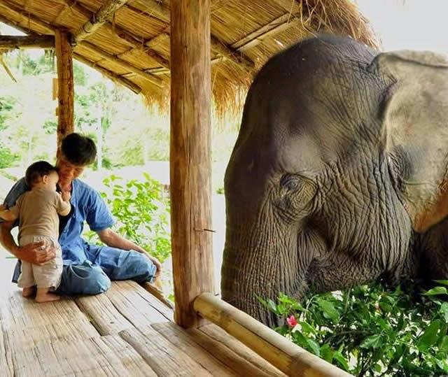 Thailand Elephant Sanctuary | Santuário de Elefantes, Thailand