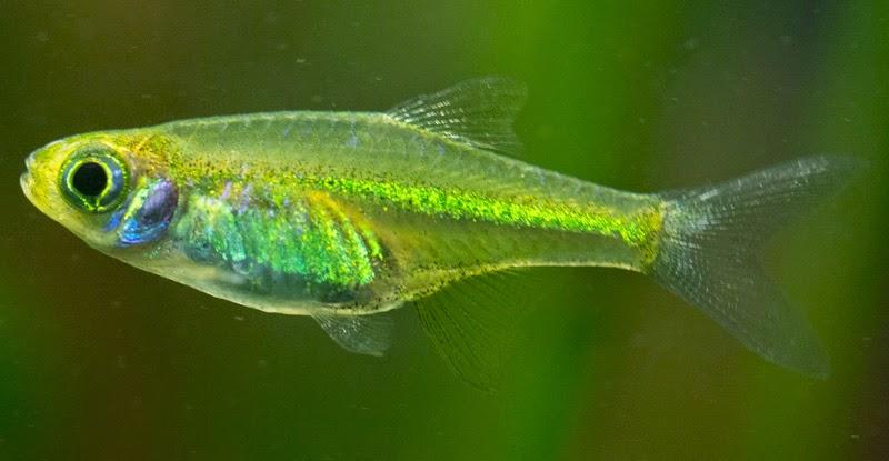 Finatics Tropical Fish : The Fish arriving tomorrow;