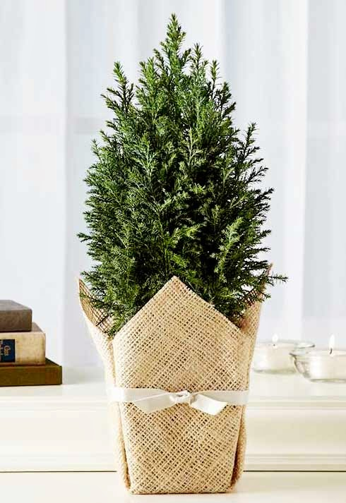 Christmas trees made for small spaces interior design inspirations for small houses - Tall trees for small spaces style ...