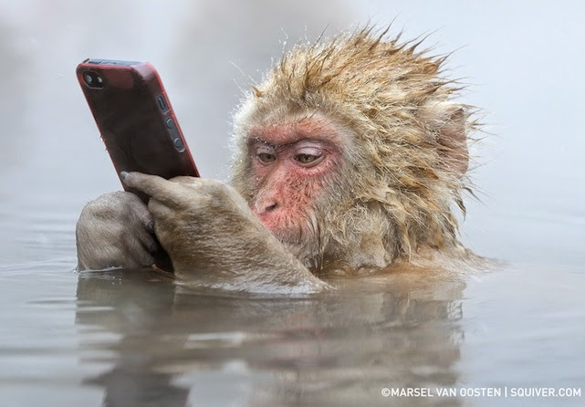 http://www.engadget.com/2014/07/07/incredible-photo-of-a-snow-monkey-using-an-iphone/?a_dgi=aolshare_twitter