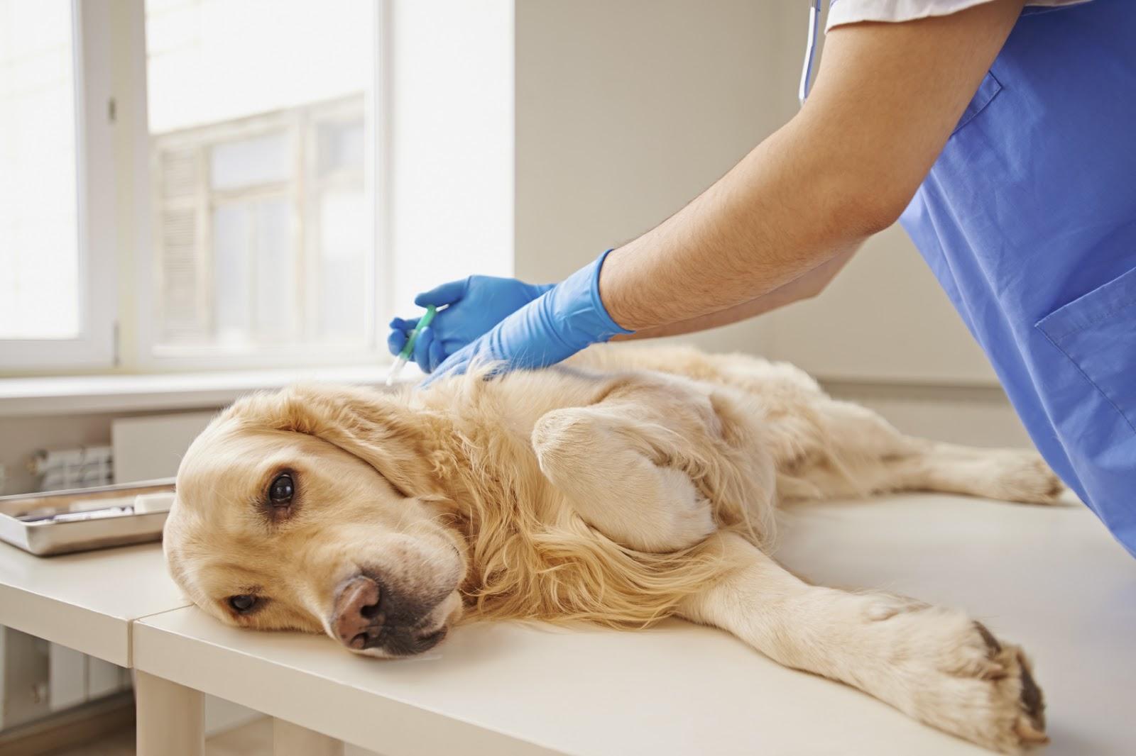 One Injection Put A Dog To Sleep