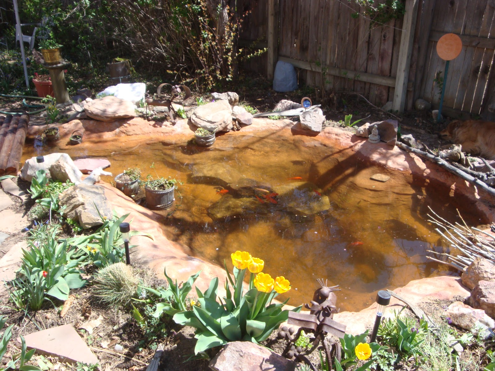 Jeffco gardener creating a backyard pond by rich haas for Creating a pond