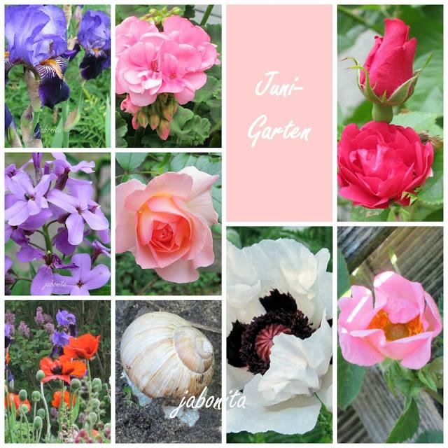 Blueten-aus-dem-Garten-im-Juni