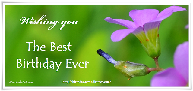 Birthday Card, Picture Birthday Card, Flower Card, Best Birthday,