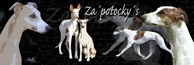 Kennel Za'potocky's