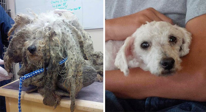 Shrek - 16 Before-and-After Photos Of Rescued Dogs