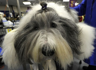 Backstage At The 135th Annual Westminster Dog Show Seen On www.coolpicturegallery.us