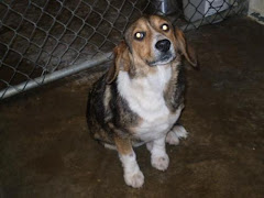 3/20/11 Mary and Others Need Sponsorship, Rescue Adoption