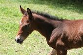 Zanny's last foal Fergie