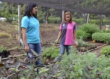 Noticias destacadas del paraguay instituto tiene vivero for Viveros en paraguay