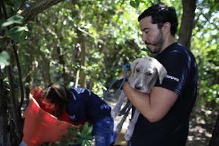 10 Cosas que Debemos Aprender de Nuestros Perros