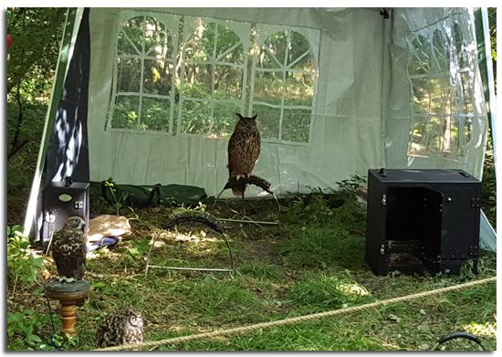 Owl keeping an eye out for the Gruffalo