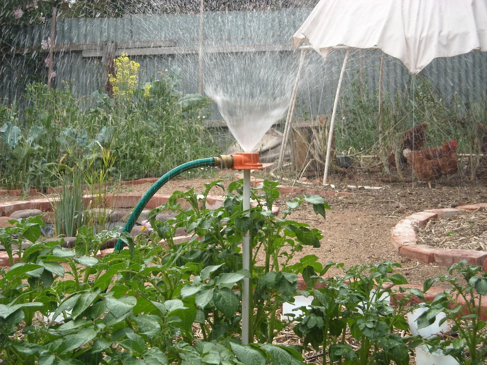 Не поливаемый огород