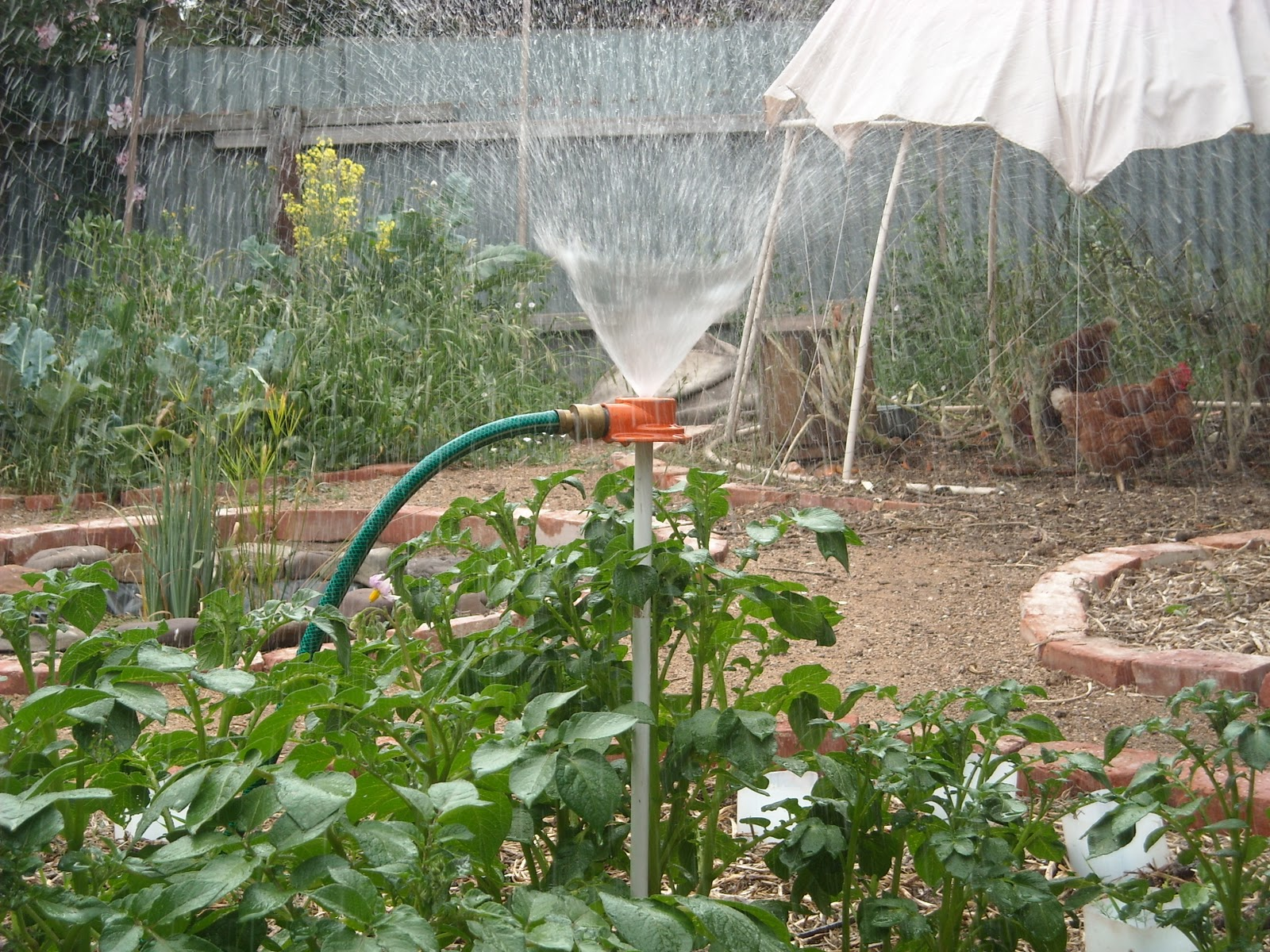 Автополив помидоров своими руками 70