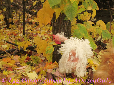 Phoebe molting right on time in October