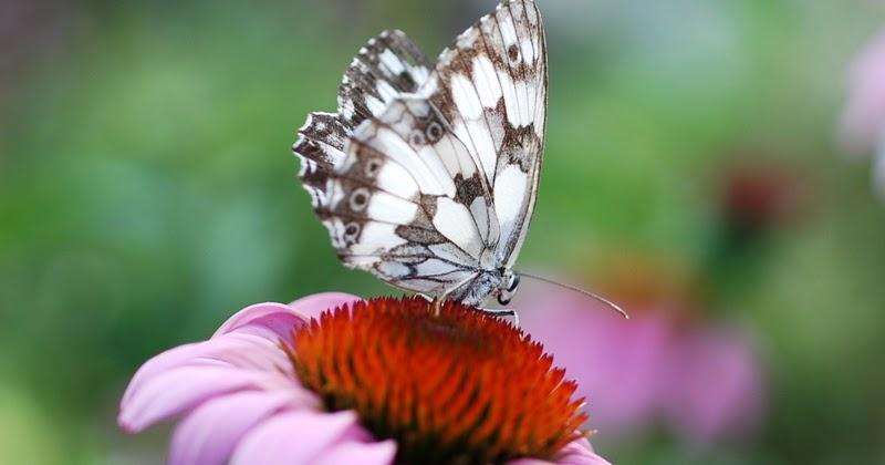 Rimedi naturali contro i bruchi dei gerani amazing come - Colorazione dei bruchi ...