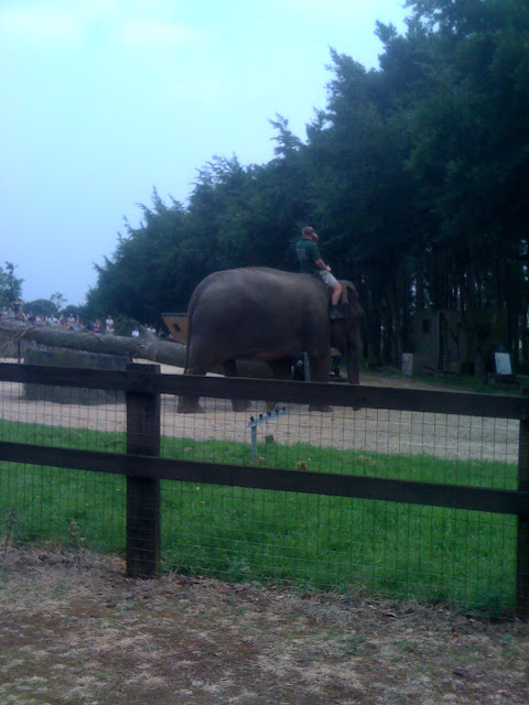 riding elephant whipsnade zoo