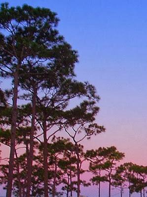 wickham park and campground, melbourne, florida