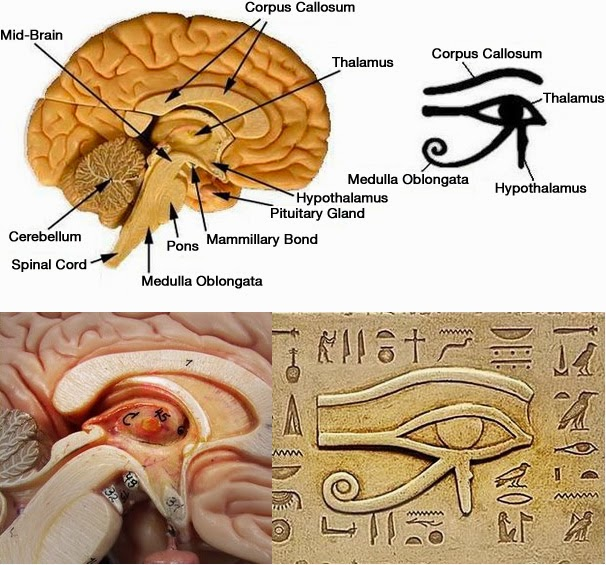 holy roman empire rules today  vatican courtyard of the pinecone  pineal gland  3rd eye  is a