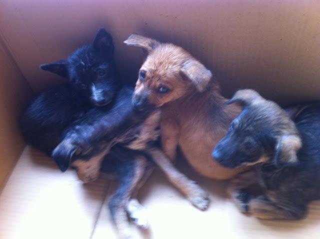 Noble galgo cachorritos encontrados en un contenedor de basura