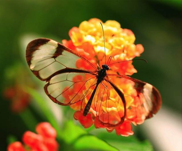 beautiful-butterfly