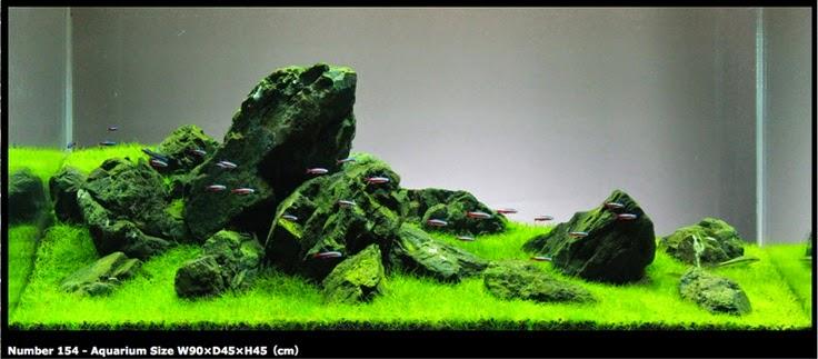 Inilah Tips Cara Penyusunan Aquascape Gaya Iwagumi Dunia Akuarium