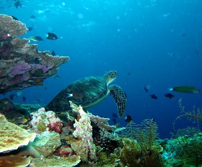 Wisata Bawah Laut